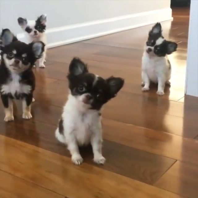 Extremely Cute Puppies