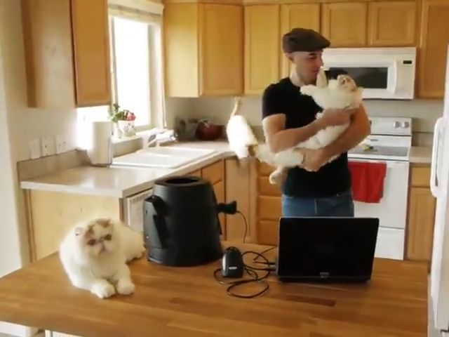 How to Have Multiple Cats - Funny Videos - funvizeo.com - cat,pet,copy