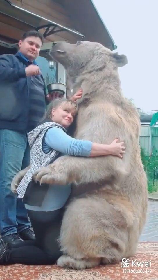 How to hug a bear