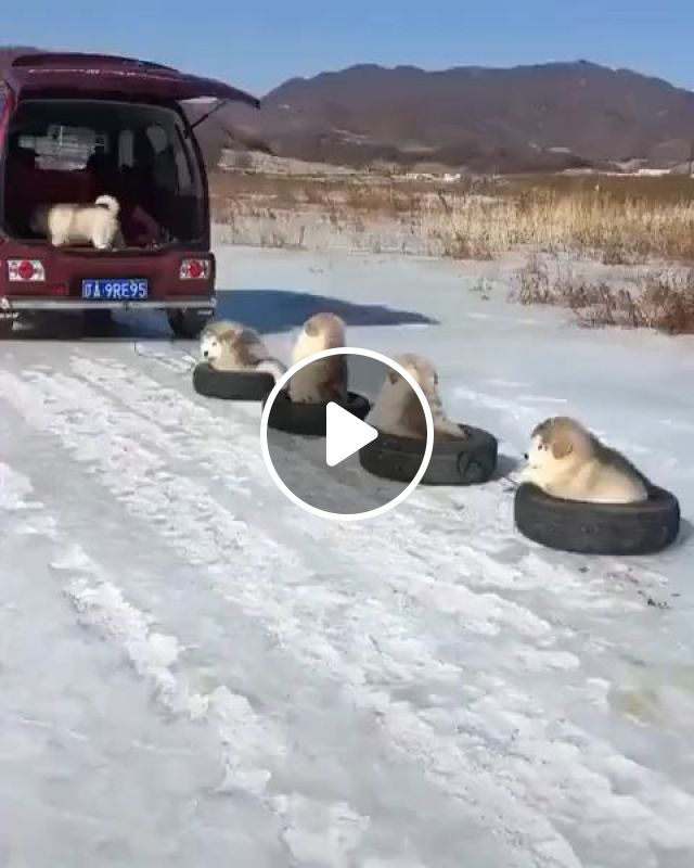 Games In The Winter Days - Video & GIFs | puppies, adorable, winter, game, pet