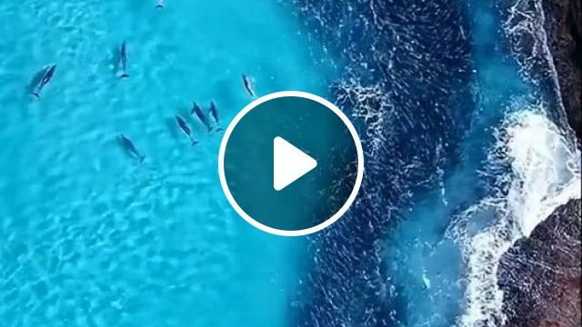 The paradise of the dolphins - Funny Videos - funvizeo.com - dolphin, animal, paradise, nature