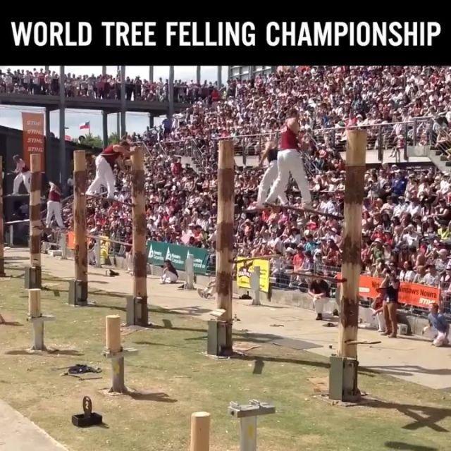 World Tree Felling Championship