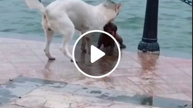 Hero Dog - Funny Videos - funvizeo.com - dog, pet, hero, smart