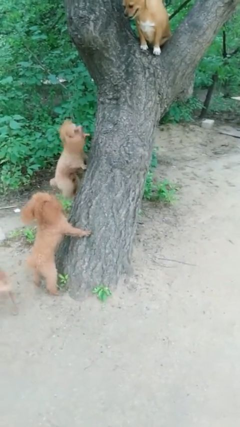 Hey bro, please guide us how to climb trees!