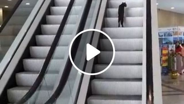 Running Stairs Workout For Fat Loss And Conditioning, Lol