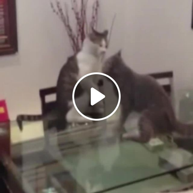 Cat Cena Meme - Video & GIFs | Cat meme, cats meme, pets meme, fun meme, funny meme, john cena meme, pancration meme, wrestling meme, fight meme, time is now meme