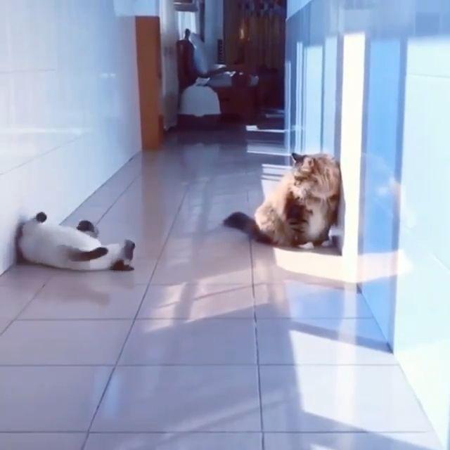 Impressive greeting way