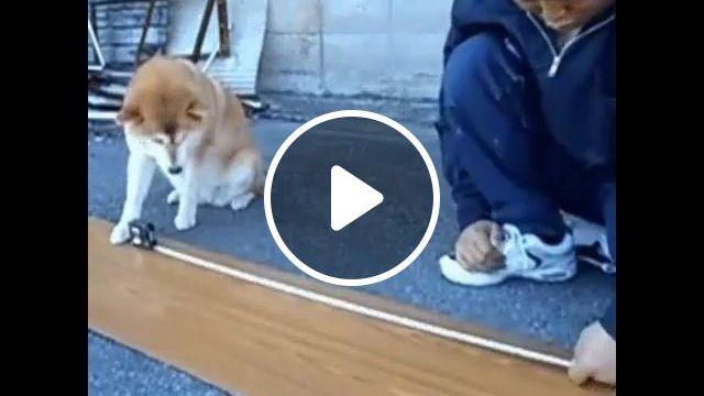 Job Assistants - Funny Videos - funvizeo.com - dog,pet,intelligent
