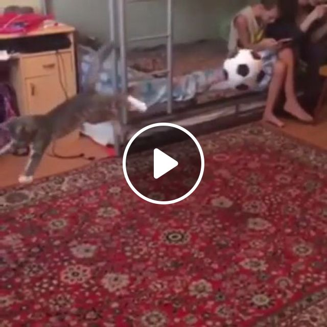 Perfect Ball Control - Video & GIFs | funny cat, funny pet, ball, soccer, football player, floor carpet