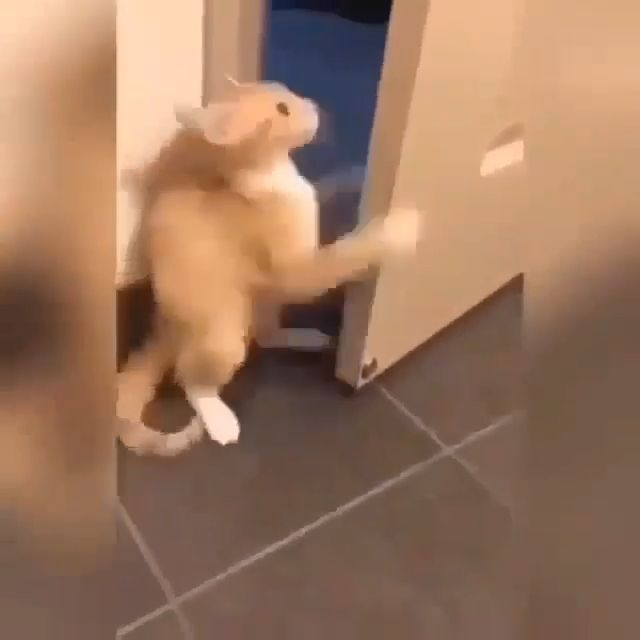 Polite Cat, lol