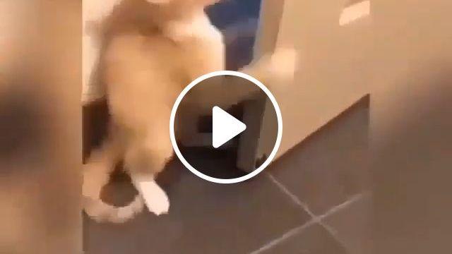 Polite Cat, lol - Funny Videos - funvizeo.com - cat,pet,door,polite