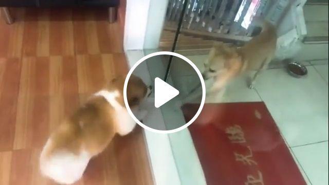 Online vs Reality life - Funny Videos - funvizeo.com - dog,fight,pet