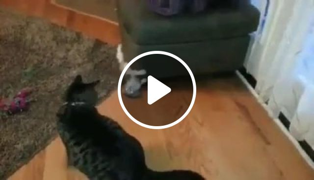 Catch Me If You Can - Video & GIFs | cat, kitty, pet, catch