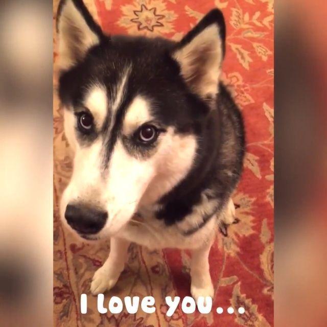 I love you - Funny Videos - funvizeo.com - dog,pet,smart,cute