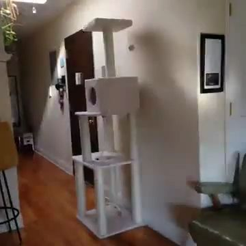 The truth about your pet - Funny Videos - funvizeo.com - funny pet,carton,container,cat tree,wooden cat tree