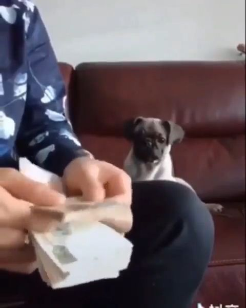 Money counting assistant