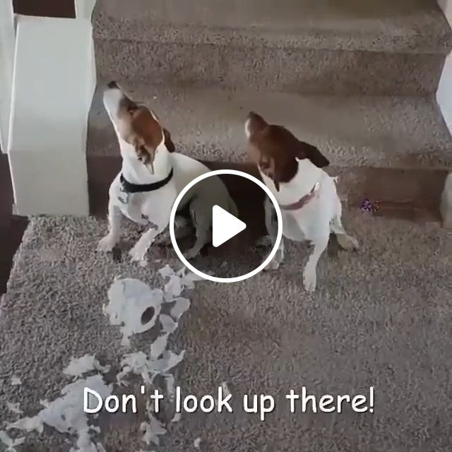 Did you do this?, dog, pet, mischievous