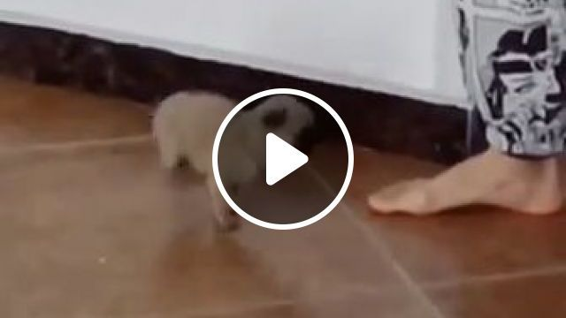 Teach adorable puppy to dance