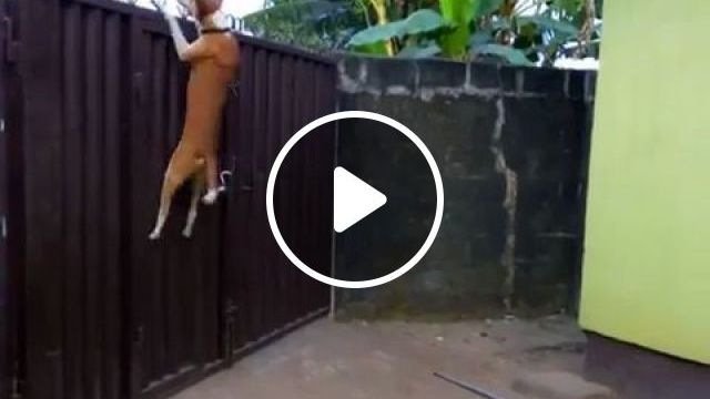 When you just want to get out of school - Funny Videos - funvizeo.com - dog,cat,pet,get out,smart