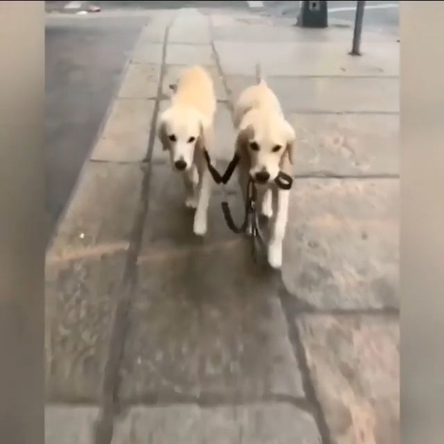 Smart Dogs Walk