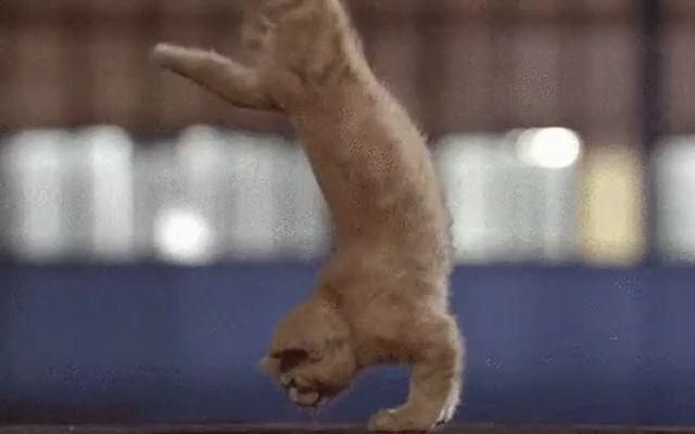 Cats Exercise