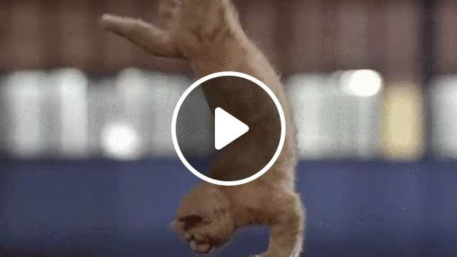 Cats Exercise - Funny Videos - funvizeo.com - funny cat,funny pet,exercise,healthy body,run,abdomen exercises
