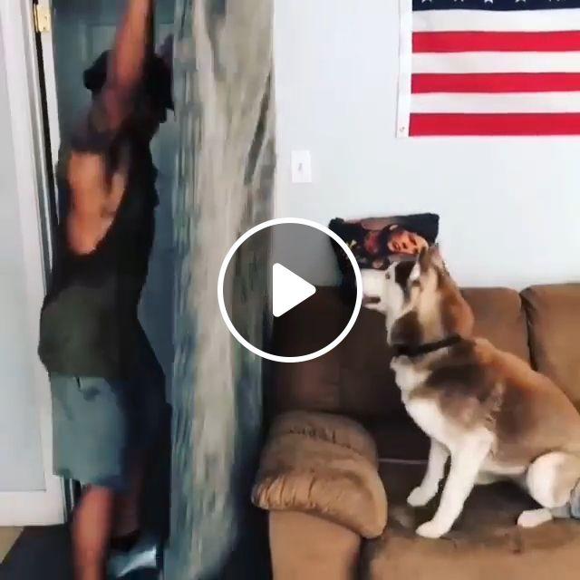Magic, Haha - Video & GIFs   husky, dog, pet, magic