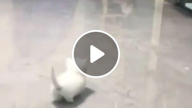 Lovely short legged kitty