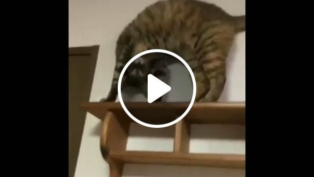 Hey little cat, what are you doing, lol - Funny Videos - funvizeo.com - cat,pet,little,mischievous