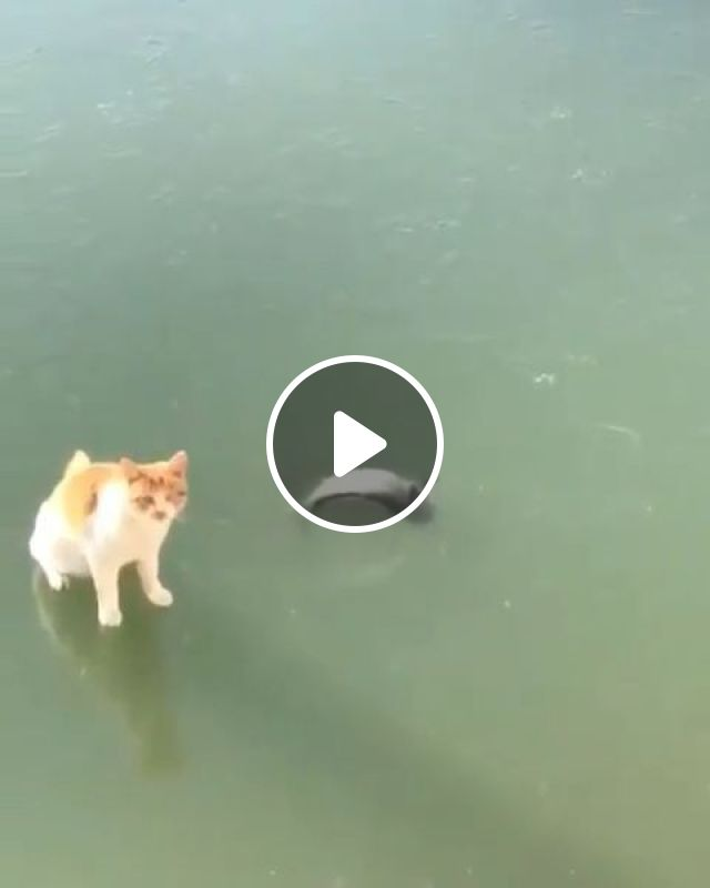 How To Catch Fish? - Video & GIFs | cat, pet, fish, ice, food