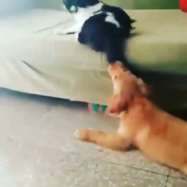 Hey little doggie, get out now, lol