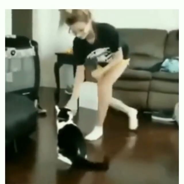 Cat teaches girl how to be boxing