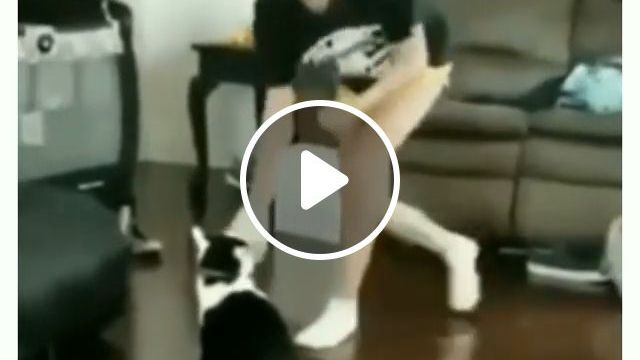 Cat teaches girl how to be boxing - video - funvizeo.com - cat,pet,boxing,fight