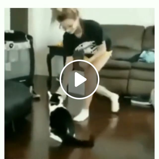 Cat Teaches Girl How To Be Boxing - Video & GIFs   cat, pet, boxing, fight