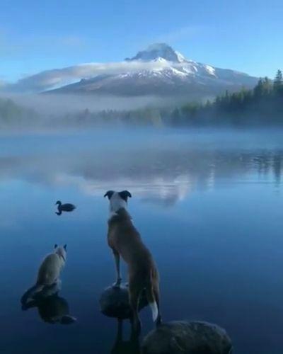 Hello New Day - Funny Videos - funvizeo.com - cute dog,cute cat,cute duck,siamese cat,beautiful nature,cute pet,lake,mountain,fog