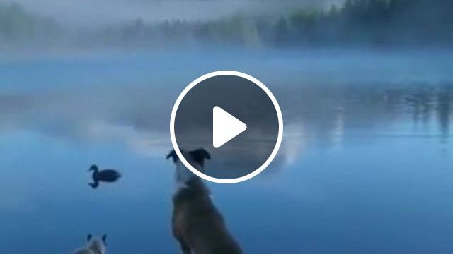 Hello New Day - video - funvizeo.com - cute dog,cute cat,cute duck,siamese cat,beautiful nature,cute pet,lake,mountain,fog