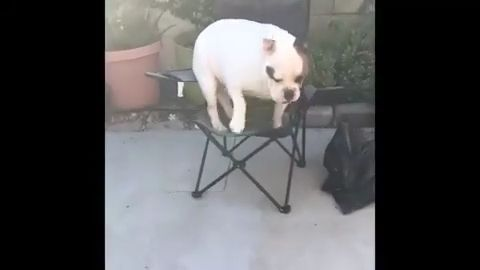 What happens when you are too fat - Funny Videos - funvizeo.com - dog,pet,fat