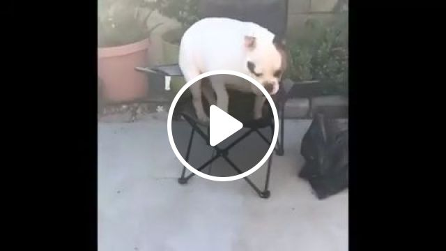 What Happens When You Are Too Fat - Video & GIFs | dog, pet, fat