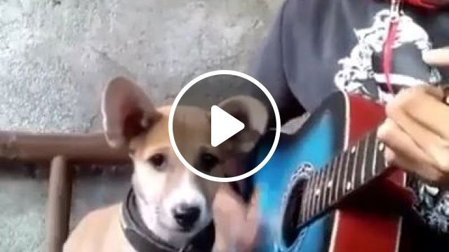 Best singing dog
