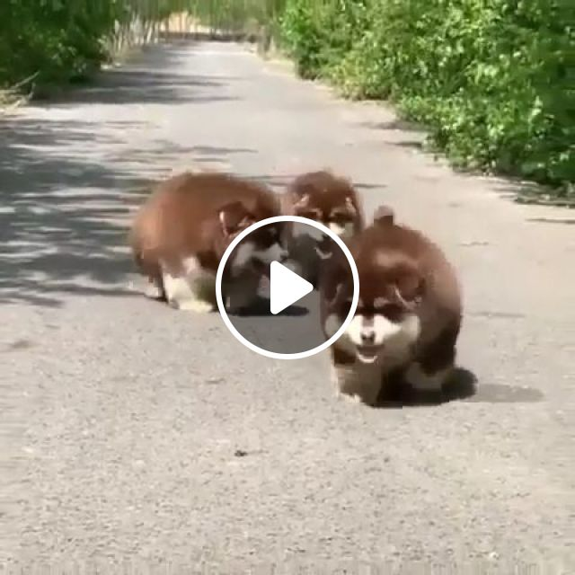 Lovely Puppies - Video & GIFs | puppies, lovely, dog, pet, adorable