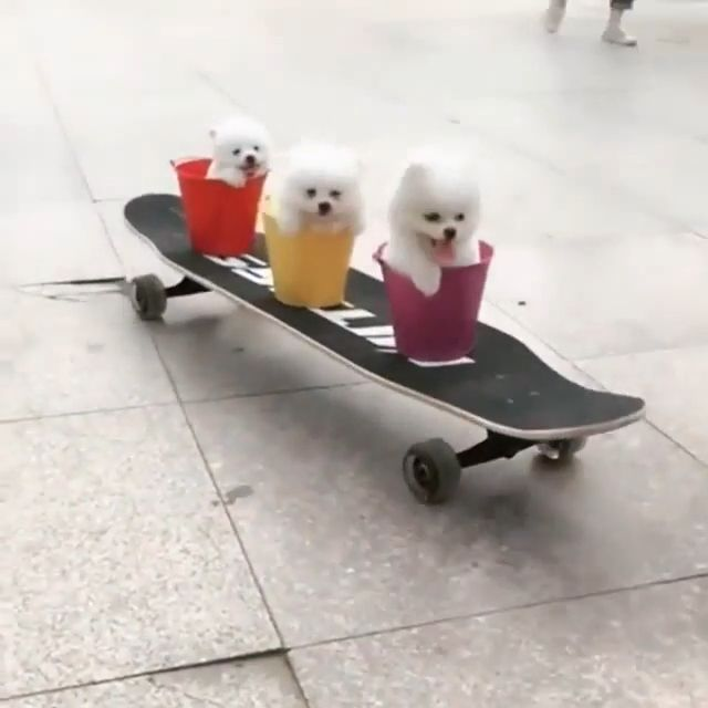 Adorable Puppies