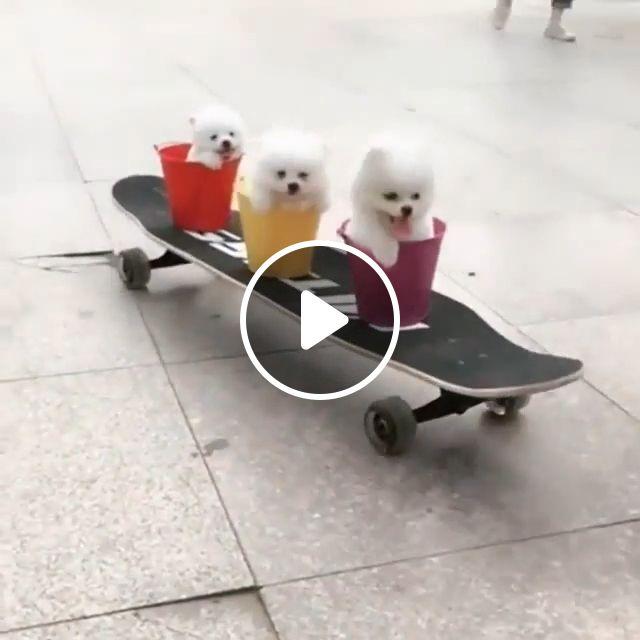 Adorable Puppies - Video & GIFs | cute puppies, dog, plastic buckets, skateboard, pet