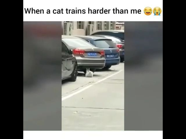 When a cat trains harder than me