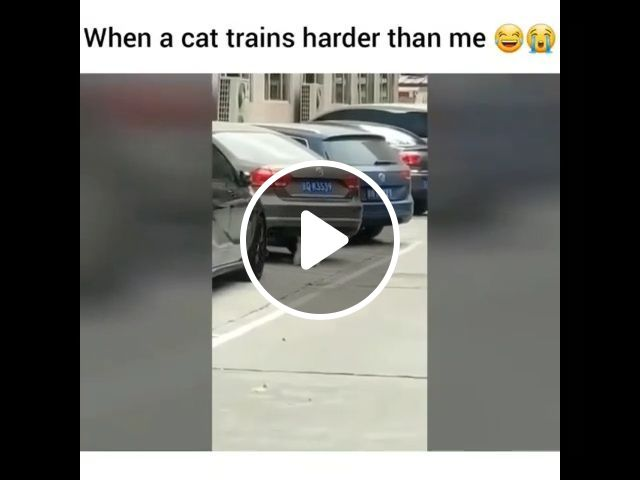 When A Cat Trains Harder Than Me - Video & GIFs   cat, pet, gymnastics, abdominal muscles