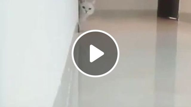 What are you looking at? - Funny Videos - funvizeo.com - funny cat,funny pet,moving,wall,floor