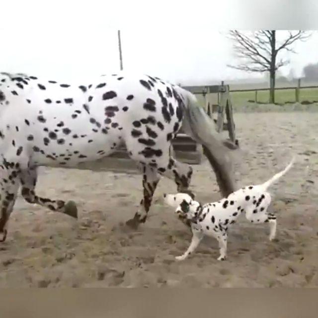 Take a walk with mom