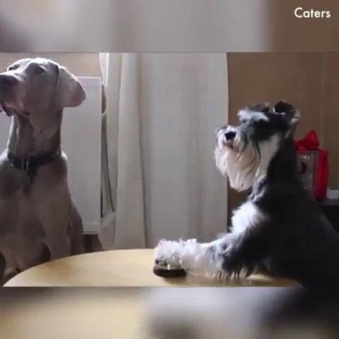 Yummy Yummy - Funny Videos - funvizeo.com - dog,pet,eat,food,adorable
