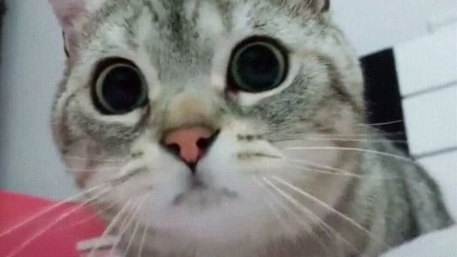 When you see your crush - Funny Videos - funvizeo.com - adorable cat,cute pet,cute cat,cat eyes