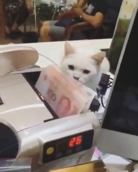 This money is mine, lol - Funny Videos - funvizeo.com - cat,pet,money