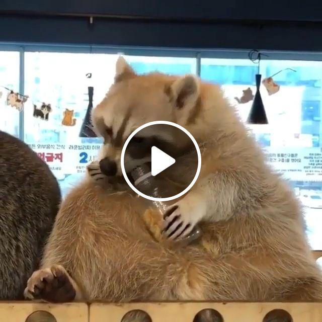 Yummy Yummy - Video & GIFs   animal, racoon, eat